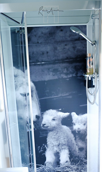 shower with the sheep