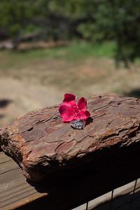Riley Yosemite Elopement