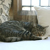 Butley Priory cat on a wedding day