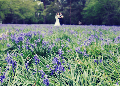 A bride and groom in the bluebell woods at Haughley Park Barn on their wedding day