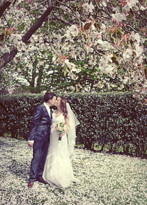 A bride and groom underneath a cherry tree in blossom at their wedding at Haughley Park Barn