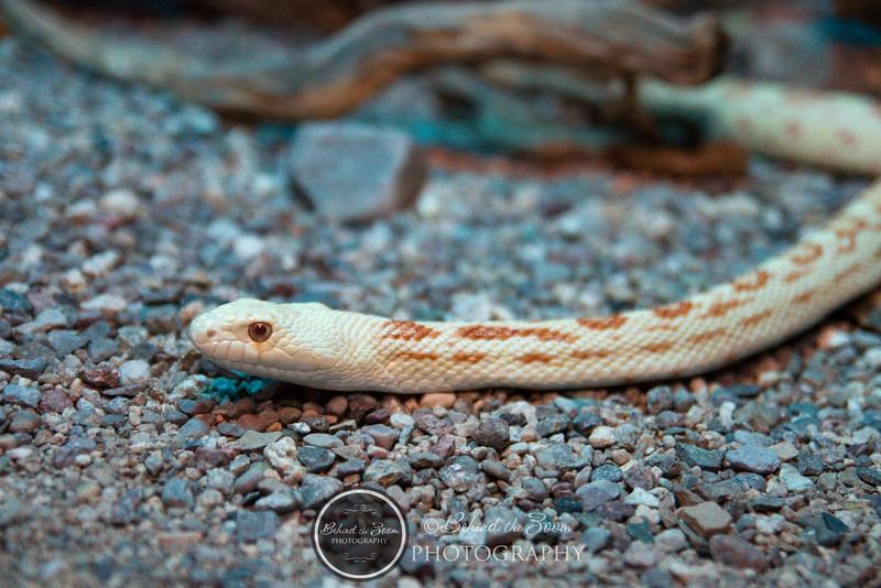 2010 July 24 Desert Museum photowalk-1383