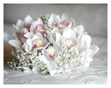 Barbados Orchids