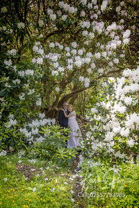 Angela-Mark-Clyne Gardens-018
