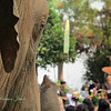 Elephant observing the ceremony.