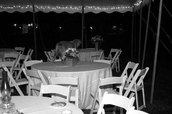 Reception Scenes III_BW_UPFexp
