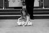 Wedding_Howard_rehearsal_flower petals_girl_4831