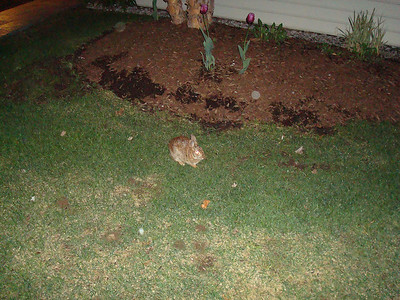 Bunny outside the Desmond