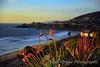 Birds-of-Paradise kissing along the California coast.