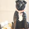 The Venetian Room Atlanta Wedding Photograph - Samantha + Austin - Six Hearts Photography_0728