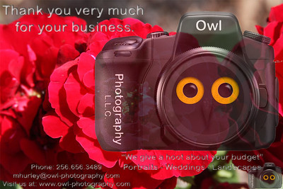 Owl-ThankYou