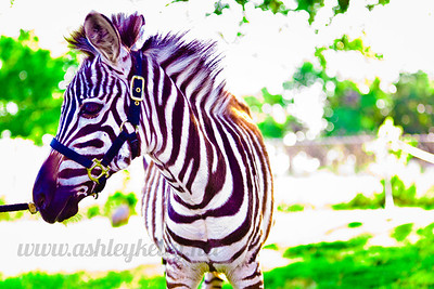 //ashleykellyphotography.smugmug.com