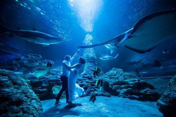 AQWA Bride + Groom Underwater Shoot