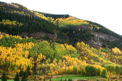 Vail Aspens in Peak Color