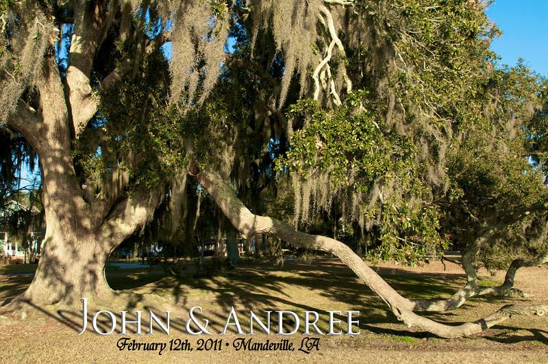 J&A Tree