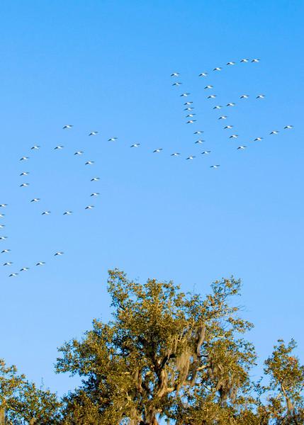 J&A Birds