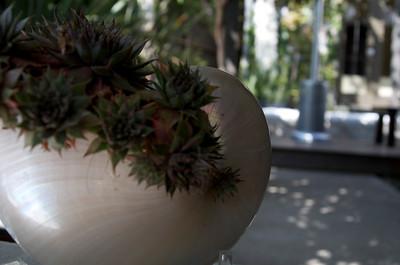 Succulents in a nautilus