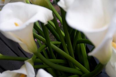 White Calla Lillies