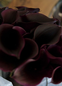 Burgundy Calla Lillies, Bride's Bouquet
