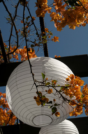 Lantern and orange flowers