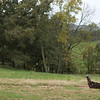 Claxton Farm is one of the premier venues for weddings, corporate events and parties in the Asheville WNC area