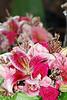 Flowers_0114