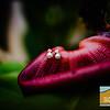 Averi+Jordan ~ Married_007