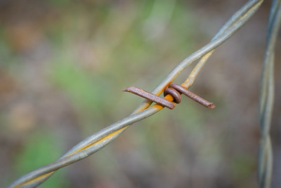 Small Twist of Barbed Wire