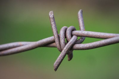Sharp Twisted Barbed Fence