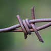 Rusted Barbs of Wire Fence