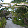 "The double arch, braided palm, entry to the wedding site. Northern tip of the caye (pronounced - ""kee"" or ""key"" I learned)."