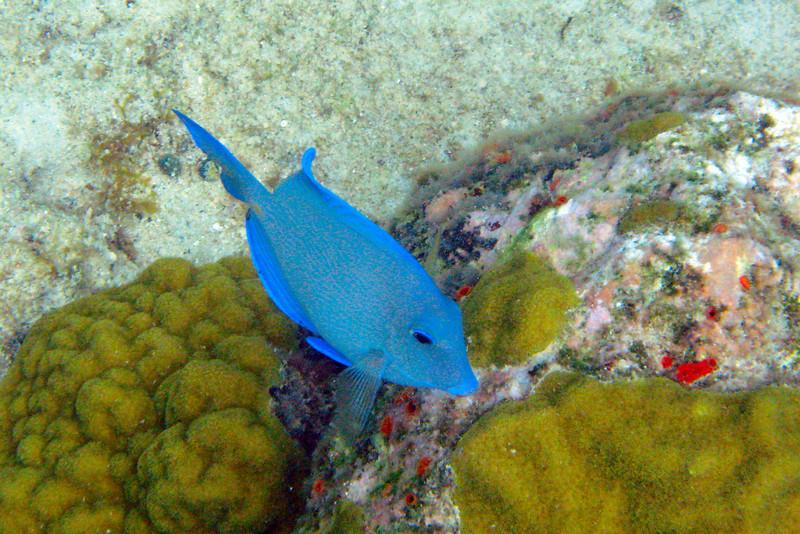 various fish at Trunk Bay