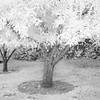 Infrared pictures of the wedding site