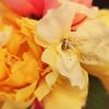 Chea_12June2010_48