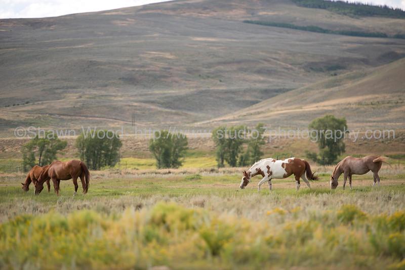 Colorado_14_0036