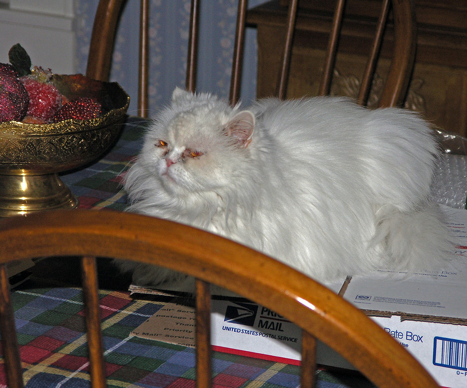 2011 Aug 6.  Cat had no problem establishing her kingdom.  One of her thrones was on top of the dining room table.