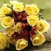 Roses---FMK_1396-2