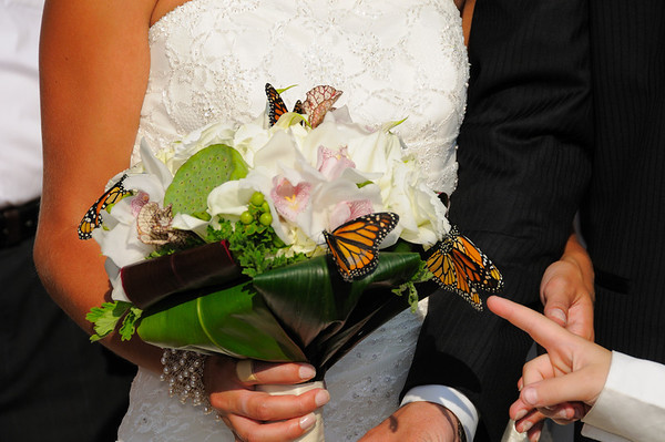 Billy and Emily's Wedding Butterfly Release