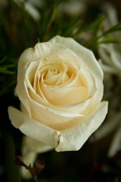 CristySean-Wedding-FR-7185