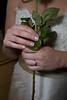 20080216_dtepper_hill_wedding_01_nadine_prep_DSC_0018