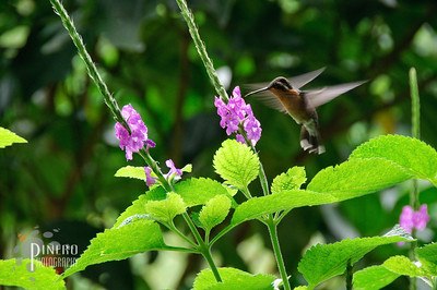 Hummingbird outside our porch.  They put plants to attract them there.