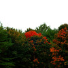 Fall colours beginning to appear