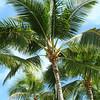 the obligatory palm tree shot