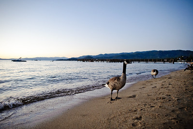 1269-d700_Jason_and_Kelley_Lake_Tahoe_Wedding_Photography