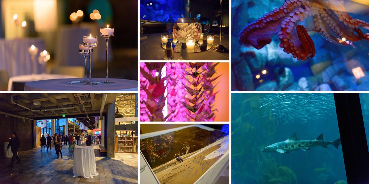 Monterey_Bay_Aquarium_Wedding_Photos_-_Monterey_-_Jamie_and_Jake_29