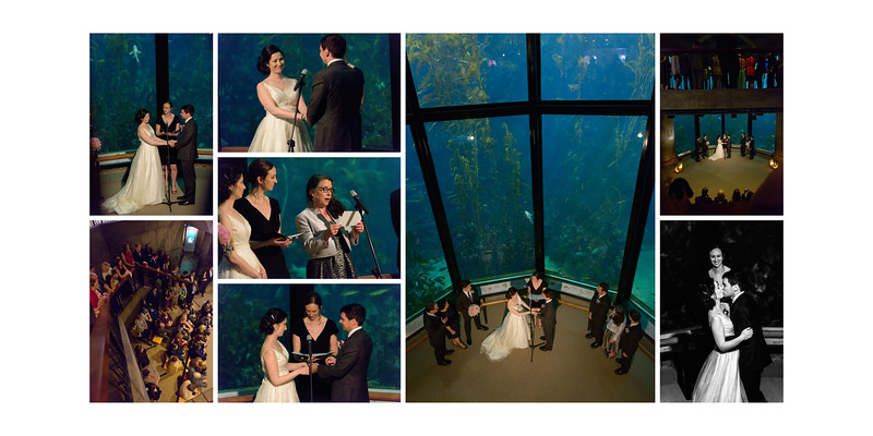 Monterey_Bay_Aquarium_Wedding_Photos_-_Monterey_-_Jamie_and_Jake_30