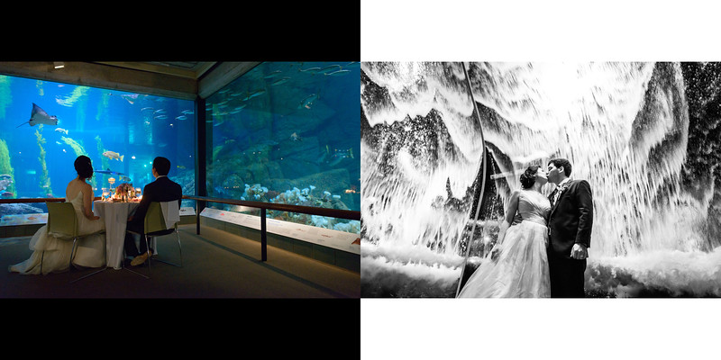Monterey_Bay_Aquarium_Wedding_Photos_-_Monterey_-_Jamie_and_Jake_35