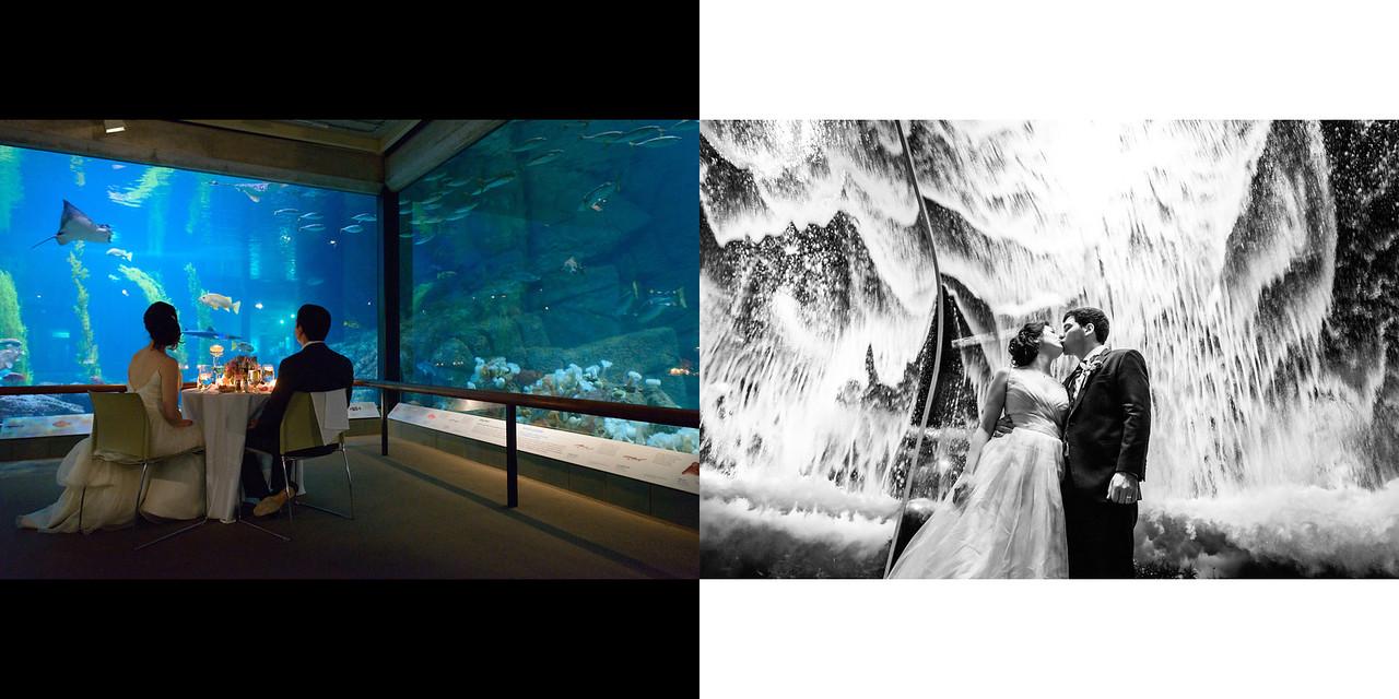Monterey_Bay_Aquarium_Wedding_Photos_-_Monterey_-_Jamie_and_Jake_35