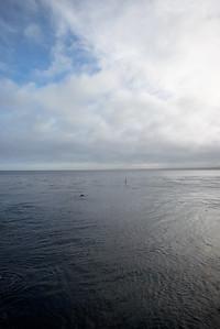 1612_d800_Kirsten_and_Bob_Monterey_Bay_Aquarium_Wedding_Photography