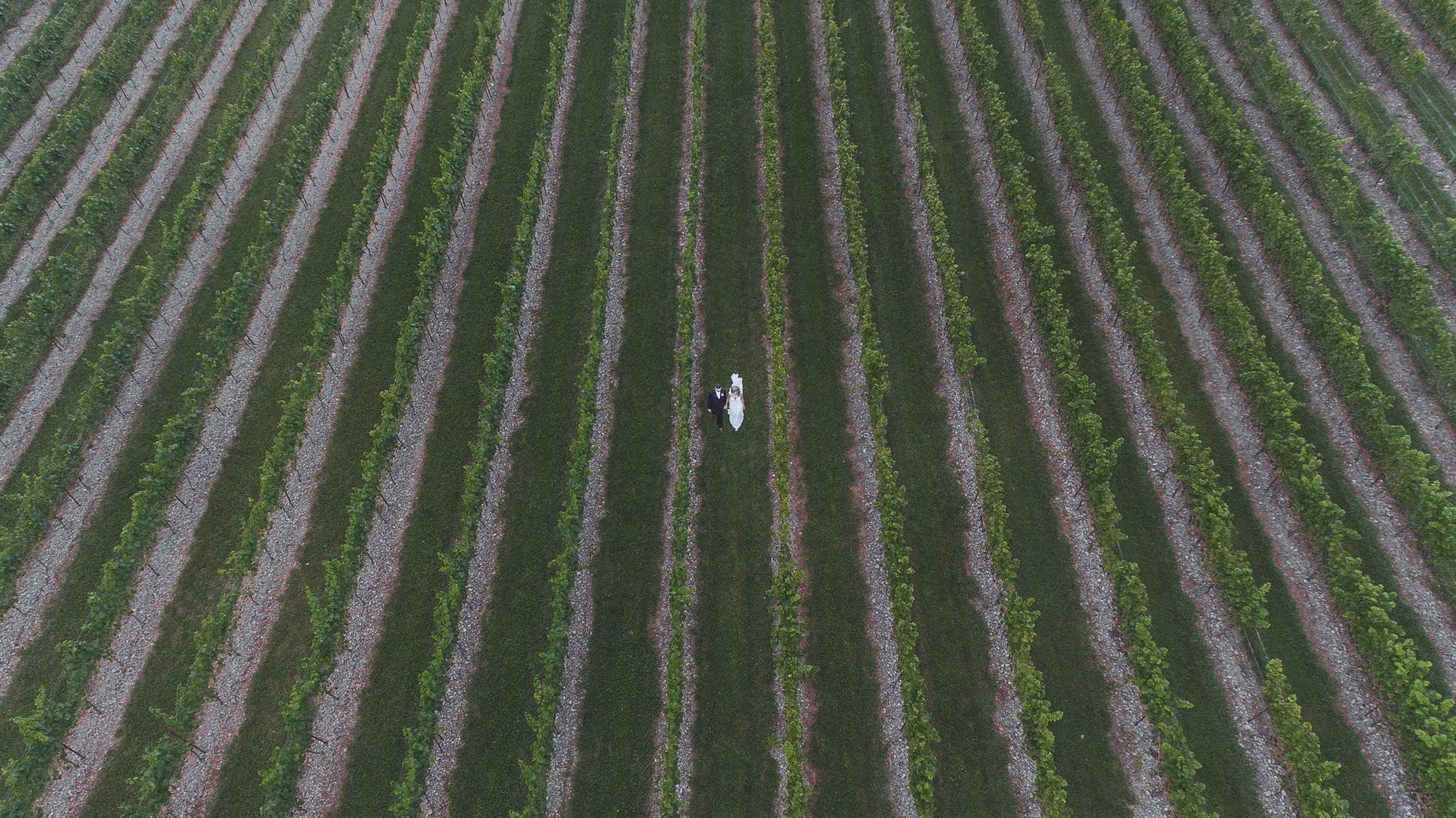 Drone wedding shot from above the vineyard